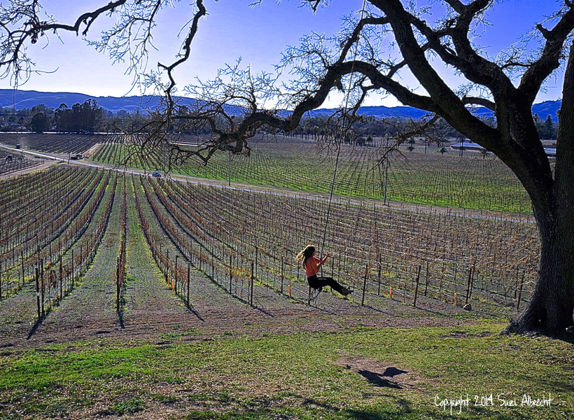 Taylor Field on Tree Swing at Scribe in Napa