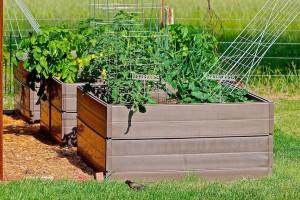raised vegetable planters