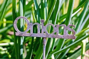onions metal garden sign