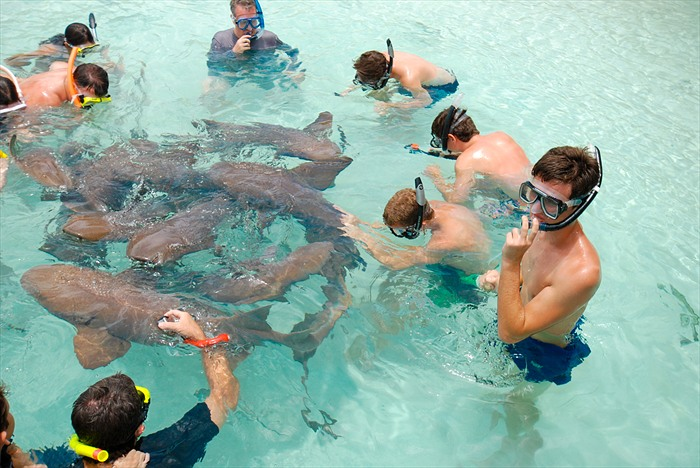 touching sharks at compass cay