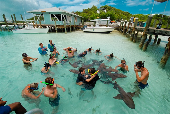 Swimming with a family of sharks in Exuma