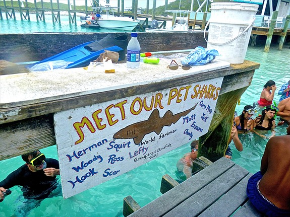 The sharks in Exuma had names like Squirt