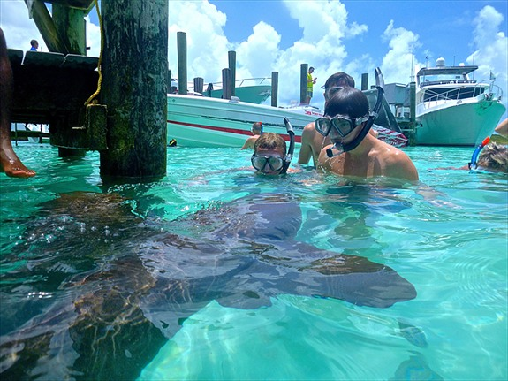 Swimming with Sharks on Compass Cay in the Exumas - Travel Tao