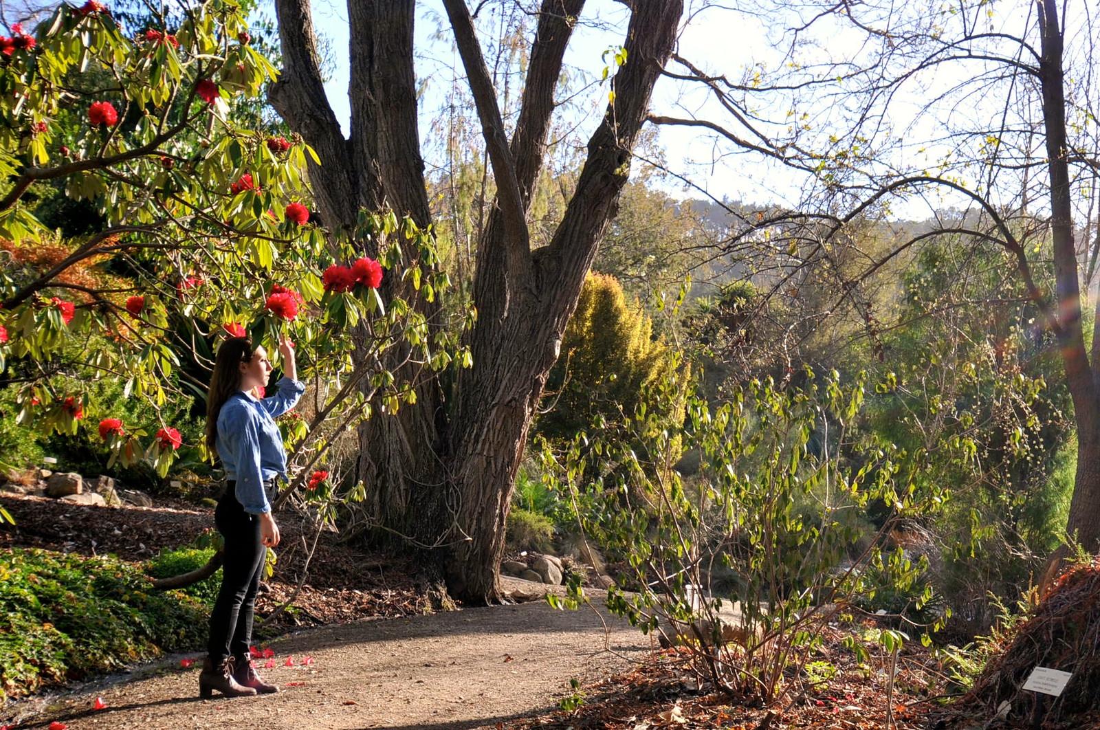 Taylor At University Of California Botanical Gardens Berkley