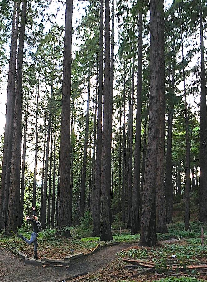 Suzi-in-the-redwoods